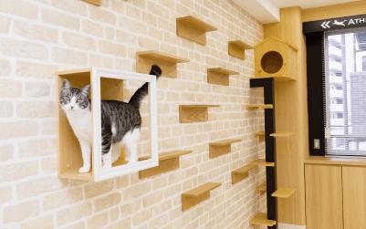 猫の看護実習室