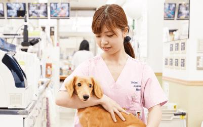 動物看護師コース