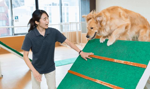 大型犬のトレーニング体験